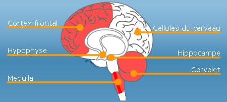 Probleme de memoire cerveau
